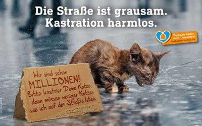 Das Leid der Straßenkatzen…und was wir dagegen tun können
